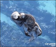 mother sea otter and her baby