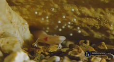 Rare Birth of 'Baby Dragons' at Slovenia Cave http://whtc.co/8scx