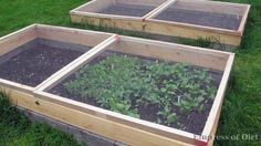 Protect your veggies with garden screens, on hinges. Doing this today!