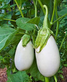 2019 Seeds   $1.69 Max Shipping//order 75 Cherokee Purple Heirloom Tomato Seeds