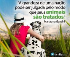 Familia.com.br   Como #encontrar um #animal de #estimacao para a #família. #Lar