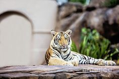 A great image for the wall in the home or office of Mike VII taking it easy...