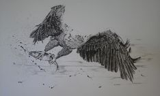 Pen and ink by Val Myburgh Art Eagle Hunting, Freelance Illustrator, Painting & Drawing, African, Paintings, Fish, Drawings, Illustration, Artist
