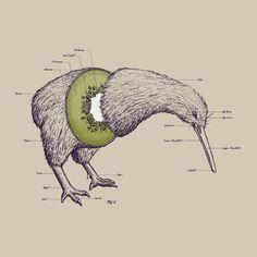 The anatomy of a kiwi.