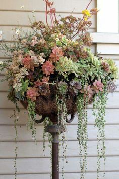 Container Gardening Use an old lamp base and hanging planter basket to create a unique garden pedestal - The upcycled garden: great ideas for using recycled items as garden art. Succulents Garden, Garden Plants, Planting Flowers, Succulent Plants, Succulent Display, Succulent Ideas, Colorful Succulents, Succulent Bouquet, Flowers Garden