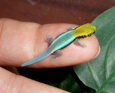 Reptiles muy curiosos , hermosos !