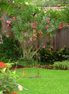 Fred Jinkins - Corner of Garden