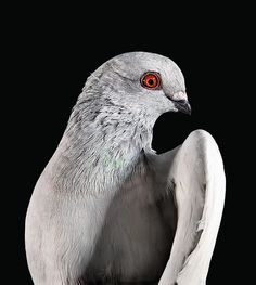 A Look At New York Pigeons by Andrew Garn -- New York Magazine, Feb. 3, 2014
