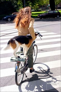 The dog would have to be well behaved to stay on the back of this bike.