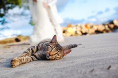 mon-chat-a-mon-mariage-wedding-dog-13.jpg (640×427)
