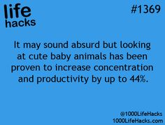 It may sound absurd but looking at cute baby animals has been proven to increase concentration and productivity by up to 44%.