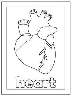 Coloring Pages Of The Human Heart For KidsKidsfreecoloring