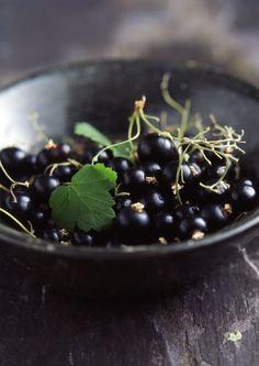 Eating freshly picked blackcurrants