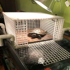 Large Turtle Tower Above tank basking area turtle Basking Turtle Aquarium, Aquarium Pump, Diy Aquarium, Aquatic Turtle Habitat, Aquatic Turtles, Water Turtles, Turtle Tank Accessories, Aquarium Accessories, Turtle Care