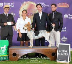 Quimbaya del Patio del Moro (Sabueso Fino colombiano) con Jonathan Alvarez…