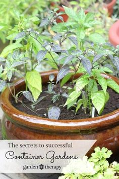 Pots that are too small, have improper drainage, and are not weather safe will quickly cause the demise of the plants within. The secret to creating the perfect container garden is to create a healthy environment for plants contained in a pot. To do this we need to look at the soil, drainage, water needs, fertilizer, and the pot itself.