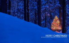 New Year And Happy Christmas Christmas Apps, Merry Christmas Friends, Christmas And New Year, Christmas Lights, Christmas Holidays, Christmas Trees, Christmas Wallpaper Android, Wallpaper Downloads, Beautiful Christmas