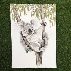 'Nap time' When it's all too hard and you need to have a rest! One tired little koala! original watercolour/ink detailing on Arches… Watercolor Pictures, Watercolor Drawing, Watercolor Animals, Animal Drawings, Art Drawings, Animal Illustrations, Koala Tattoo, Koala Craft, Australian Animals