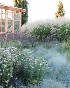 Well done mix of wildflowers and ornamental grasses. Well done mix of wildflowers and ornamental grasses. Hillside Garden, Meadow Garden, Garden Cottage, Dream Garden, Prairie Garden, Ornamental Grass Landscape, Ornamental Grasses, Back Gardens, Outdoor Gardens