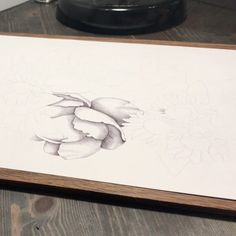 Video: drawing in progress Ballpoint Pen, Drawings, Illustration, Instagram Posts, Illustrations, Sketch, Portrait, Drawing, Resim