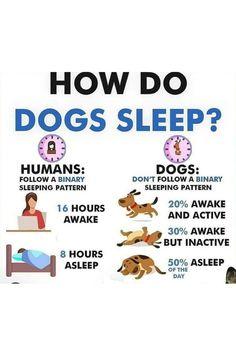Puppy Training Classes, Agility Training For Dogs, Dog Training Treats, Dog Training Courses, Dog Training Videos, Best Dog Training, Brain Training, Dog Agility, Potty Training