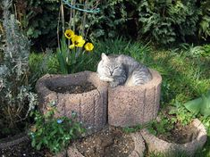 148 Cat-Plants You Probably Shouldn't Water Rare Cats, Cats And Kittens, My Flower, Flower Pots, Flowers, Cat Plants, Warm Bed, Owning A Cat, Perfect Plants