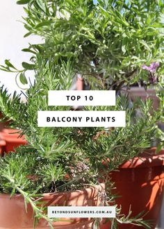 We've all seen a failed balcony garden; outdated pots and drooping plants that just don't go together. The secret to a successful balcony garden is to choose plants and trees that will not only survive but thrive. Balcony Plants, Balcony Garden, Rooftop, Balcony Planters, Rooftops