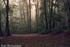 a beautiful picture of autumn by a nikon film camera in a small national park near Bucharest, Romania Autumn Forest, Bucharest, Film Camera, Beautiful Pictures, National Parks, Country Roads, Future, Photos, Future Tense