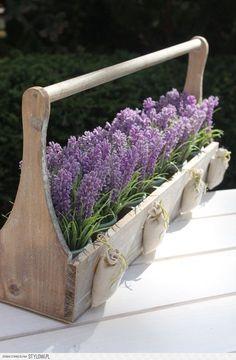 pots of lavender