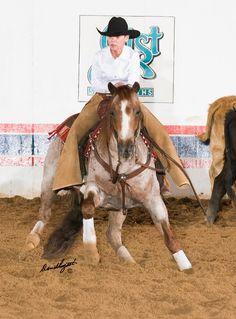 Tips for Buying a Weekend Horse.   http://www.quarterhorsenews.com/blog/13174-tips-for-buying-a-weekend-horse