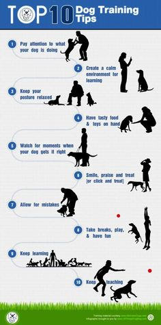 Top 10 Dog Training Tips