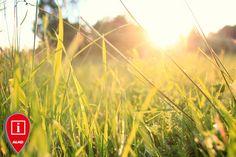 Wrzesień ( wilgotny i ciepły ) to najlepszy miesiąc na zakładanie nowego trawnika z siewu :)  http://www.sklepalko.pl/zakladanie_trawnika_krok_po_kroku.html #lawn #mower #grass #garden #green