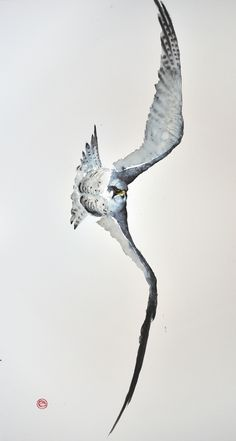 Karl Martens, Peregrine Falcon II | Cricket Fine Art