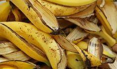 Try banana peels, stop wrinkles Skin aging? Try banana peels stop wrinkles Banana peel comes with loads of. Banana Peel Uses, Banana Peels, Banana Madura, Wrinkled Skin, Growing Roses, Tricks, Healthy Life, Food And Drink, Recipes