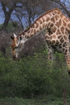 Africa Safari 015 #wildlife #africa