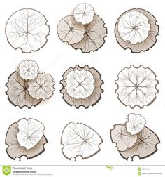 Landscape Tree Plan Trees top view