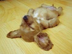 Sleeping...zzz