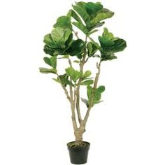 Tall Fiddle Leaf with Pot (artificial floral home dcor product) Silk Plants, Faux Plants, Indoor Plants, Bloom Energy, Delta House, Fiddle Leaf, Artificial Plants, Topiary, Decorative Accessories