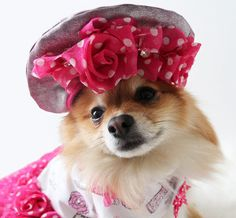 Welcome to Paris fashion on Shizzle Dogs Marketplace!   This custom dog denim pink beret french hat is made with metallic denim, pink polka dot flower roses. Crystals add bling to this cap. Elastic under chin.  This design is an excellent selection for diva dogs looking to stand out from the crowd. It also makes an excellent photo prop for your pet to wear to that next photoshoot.  #dogs #doglove