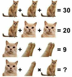 This Compilation will surely Melt your Heart with Cuteness of some Kittens. It will also make you Laugh over lots of Silly Acting scenes by Funny Kittens. Funny Animal Memes, Funny Cats, Funny Animals, Cute Animals, Funny Memes, Fun Funny, Bio Shop, Picture Puzzles, Quiz