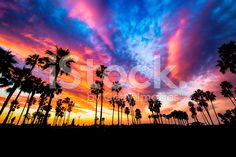 Exotic evening royalty-free stock photo