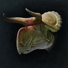 Nasutoceratops. Portrait. by Olorotitan