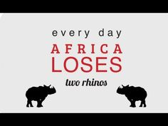 The African Wildlife Foundation is working to save the African Rhino from illegal poaching and extinction.