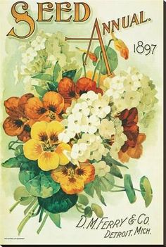 Stretched Canvas Print: Seed Annual 1897, D.M. Ferry & Co., Detroit, Michigan : 54x36in