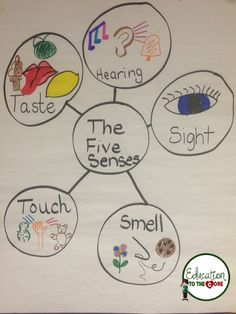 Education to the Core: 5 senses anchor chart