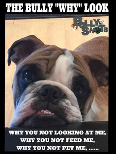 We love our English Bulldogs,  The English Bulldog look of WHY;  Bulldog Fan page http://bulldogvitamins.blogspot.com