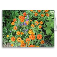 #Thanksgiving Asters Blank Card http://www.zazzle.com/MarshaIsArt*