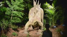 Video of the robotic dinosaurs that moved and roared at the Dinosaurs Alive! exhibit at Luna Park in Sydney. Dinosaurs Alive, Parks In Sydney, Dinosaur Images, Museums, Garden Sculpture, Google Search, Animals, Animales, Animaux