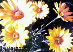 A digital painting from the garden flowers in Mijas Costa, Spain in February 2017 by Aila Hokkanen originally from Finland.