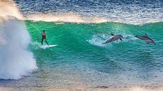 """Sono scatti sorprendenti e, per ammissione del fotografo autodidatta Matt Hutton possono essere realizzati una volta nella vita. Immortalare i delfini accanto a i surfisti. Non è la prima volta che accade, ma è certamente raro fotografarli mentre """"condividono"""" la stessa onda."""